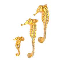 The Gold Plated Sea Horse Collection shows both the tiny and larger size.  The sea horse being one of the ocean's most interesting creatures are adorned with genuine 24K gold electroplate. Available as a tiny charm for earrings or a pendant. Available in larger size (Approx. size 2� inch) sold separately as a pendant to be worn on a gold chain...In Stock shipping weight 2 ozs. $4.50. Order NOW while supplies last! Tiny charm size (Sold Out) Approx. size 1 inch. weight 2 ozs. $3.75.